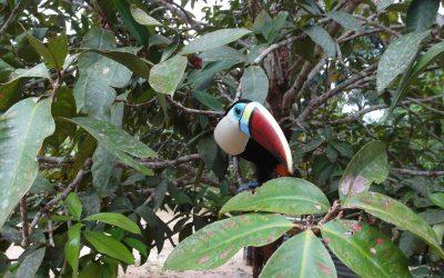 Amazonie – oáza klidu